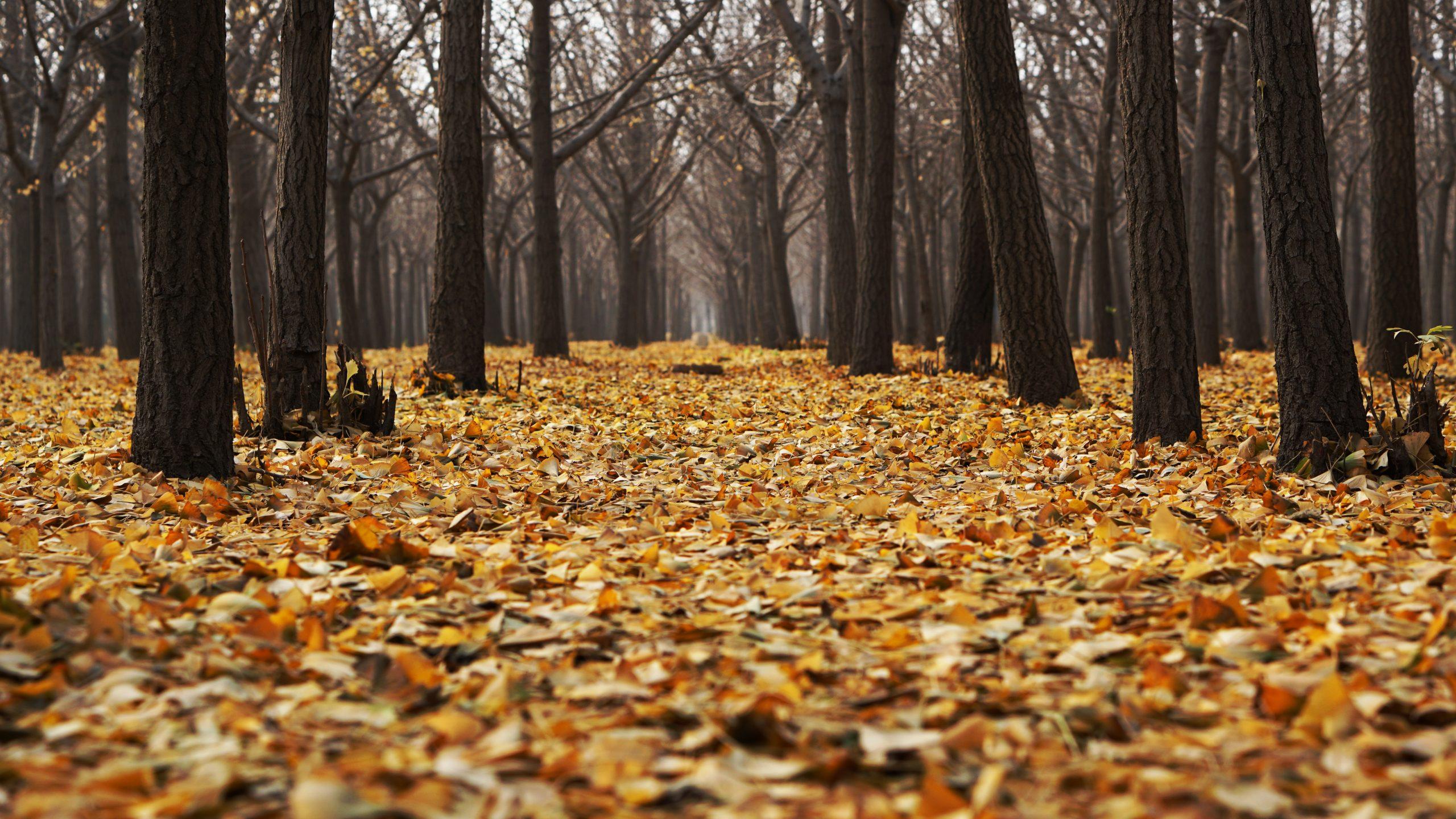 autumn-1869426