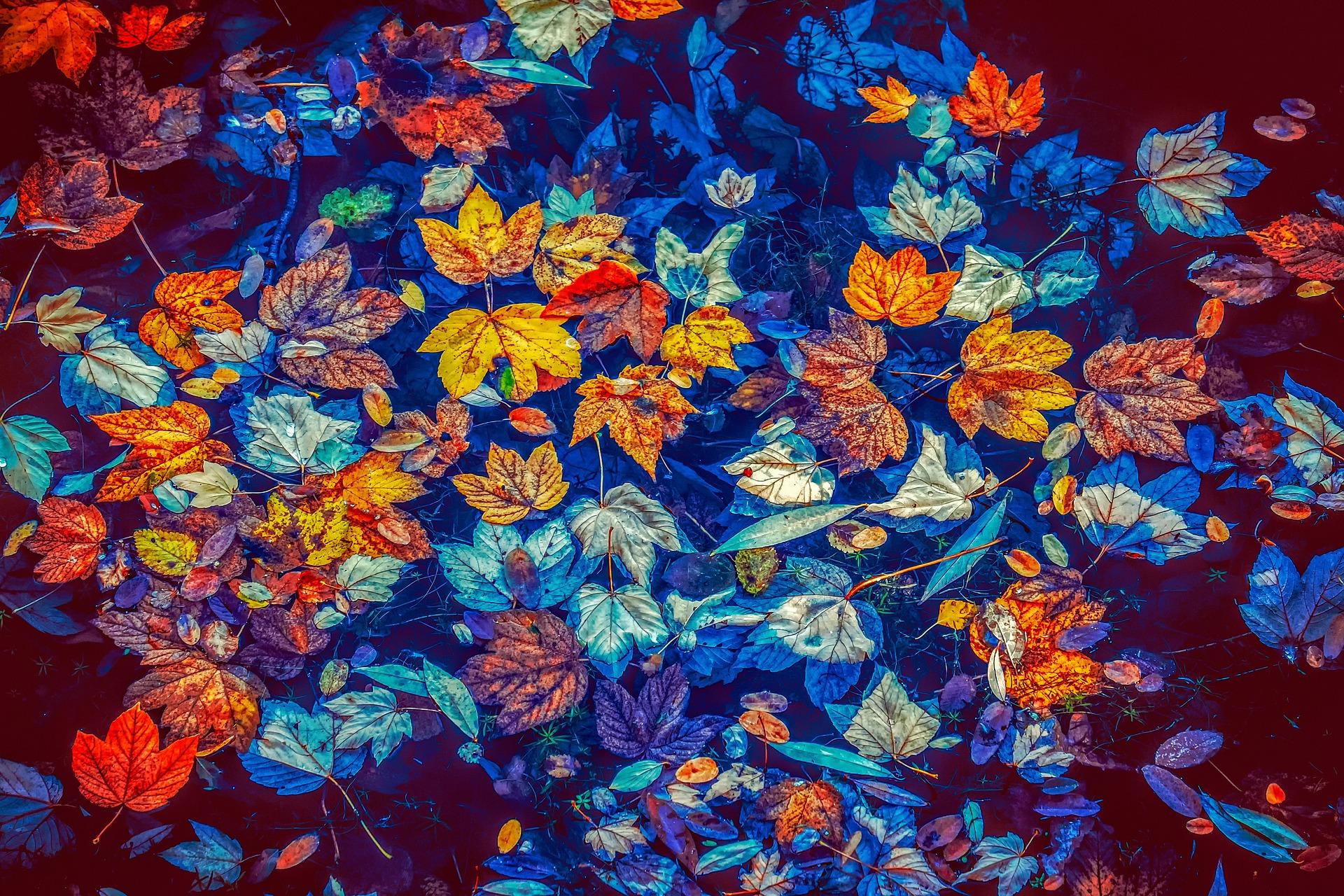fall-leaves-3744649_1920